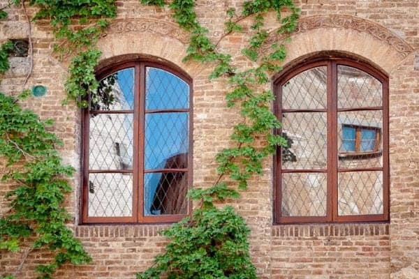 SX BSFT 60 BirdTrellis WindowVines Web 1000x664 3 600x400 - Bird Safety Window Film